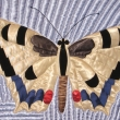Butterfly_detail_11