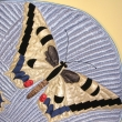 Butterfly_detail_10