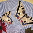 Butterfly_detail_07